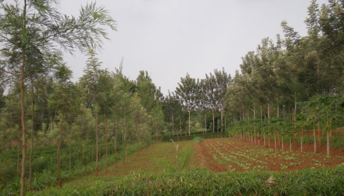 agroforestry
