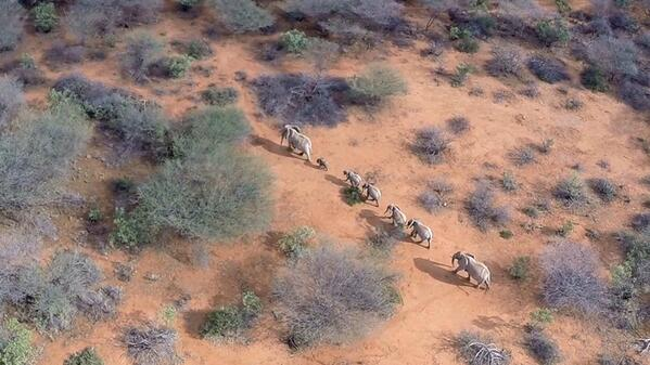 elephants at the rhino charge