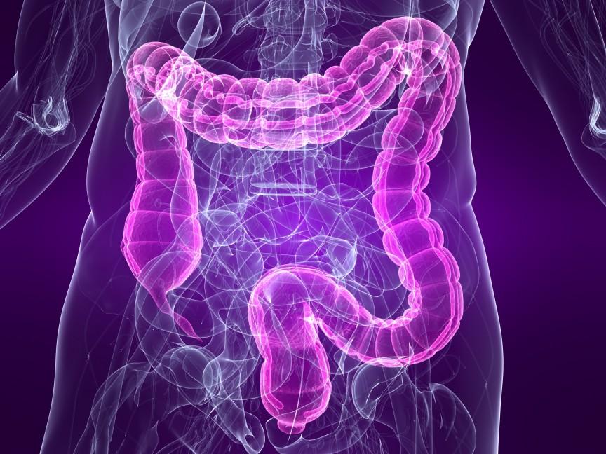 Intestine-Transplant