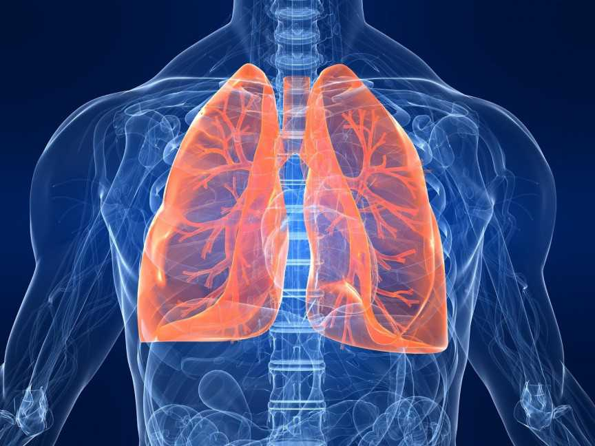 Lung-Transplant