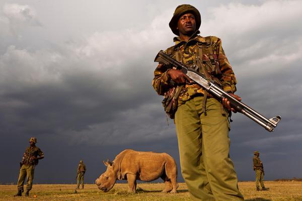 sudan nothern white rhino