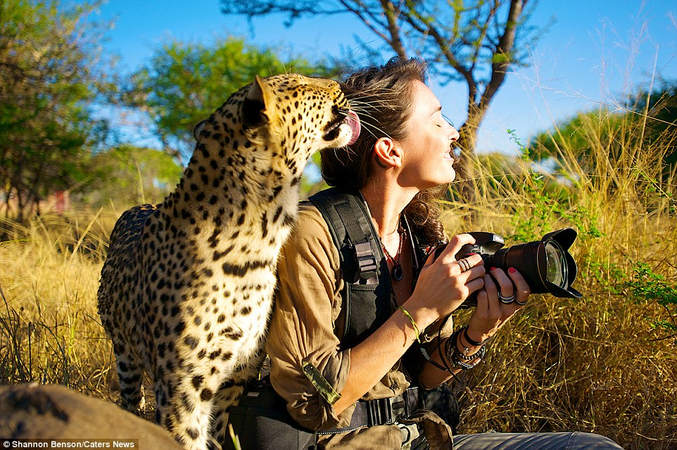 31F3234F00000578-3480156-She_s_got_it_licked_Shannon_receives_the_affection_of_a_leopard_-a-33_1457371240920