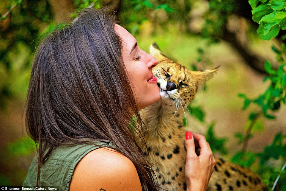 31F3326000000578-3480156-This_African_wildcat_appears_to_be_keen_to_show_some_love_for_th-a-42_1457371240927