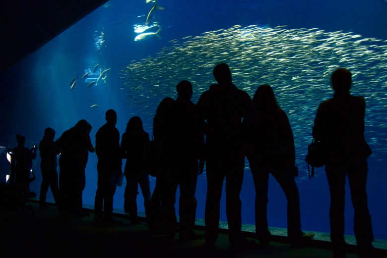 2. Monterey Bay Aquarium - Great White Shark Tank