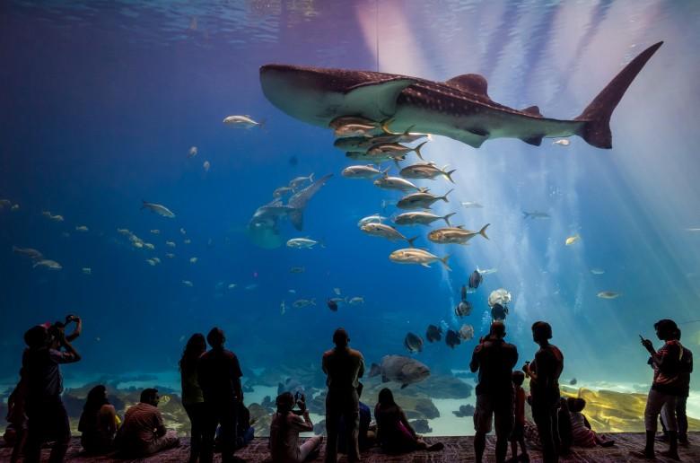 3. Georgia Aquarium