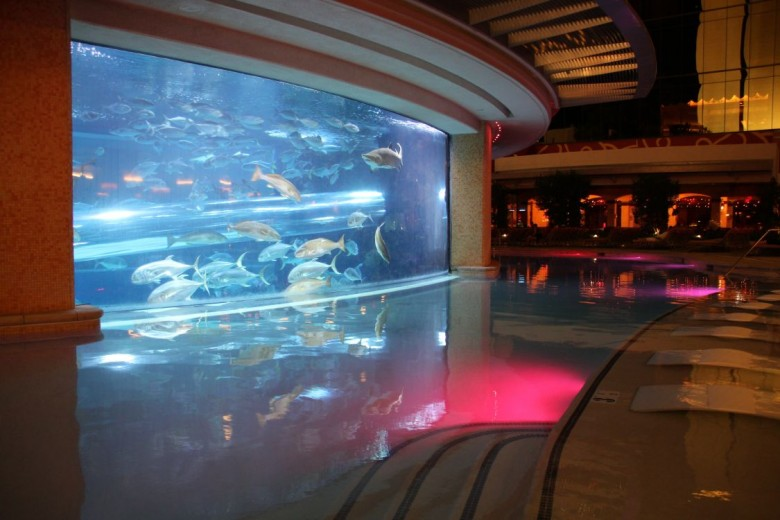 4. The Golden Nugget Shark Tank