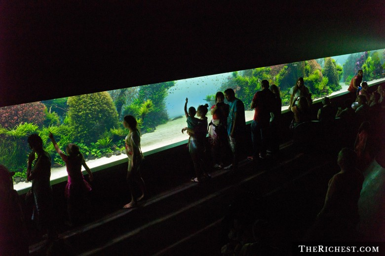 Largest Nature Aquarium of Lisbon Oceanarium