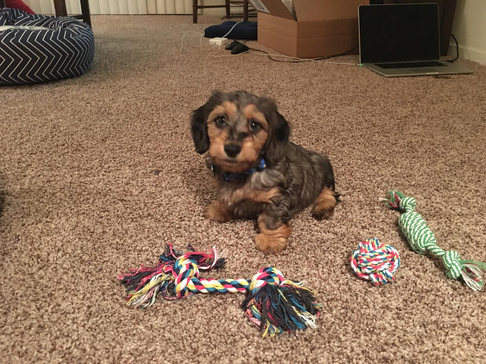 5 Best Chew Toys For Teething Puppies Naibuzz